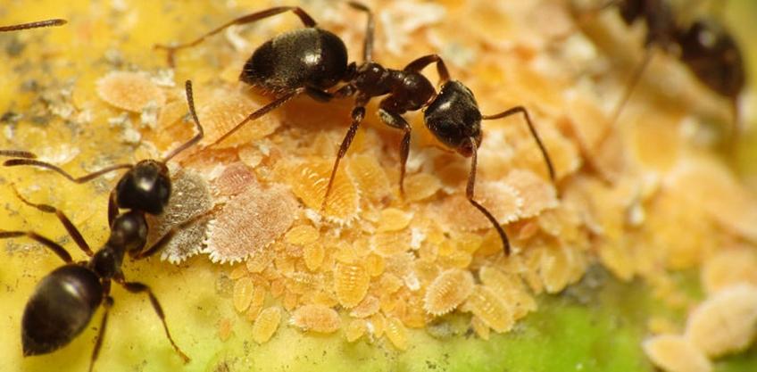 Ako sa zbaviť mravcov v záhrade