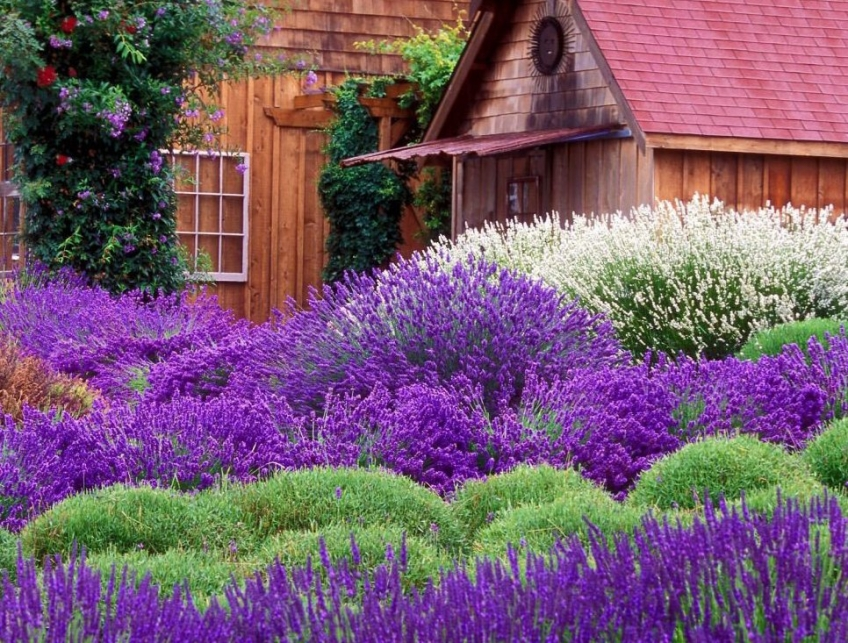 Nenáročné dreviny do záhrady