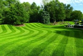 Ako vysadiť trávnik