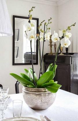 Uchvátila vás krása kvetov? Vyskúšajte pestovanie orchidei