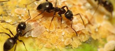 Projekty domov | Ako sa zbaviť mravcov v záhrade