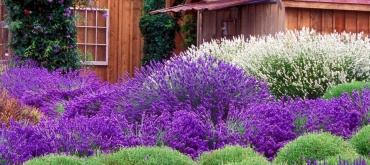 Projekty domov | Nenáročné dreviny do záhrady