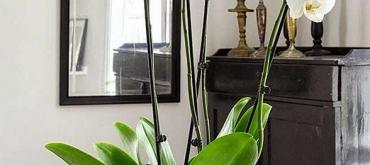 Projekty domov | Uchvátila vás krása kvetov? Vyskúšajte pestovanie orchidei